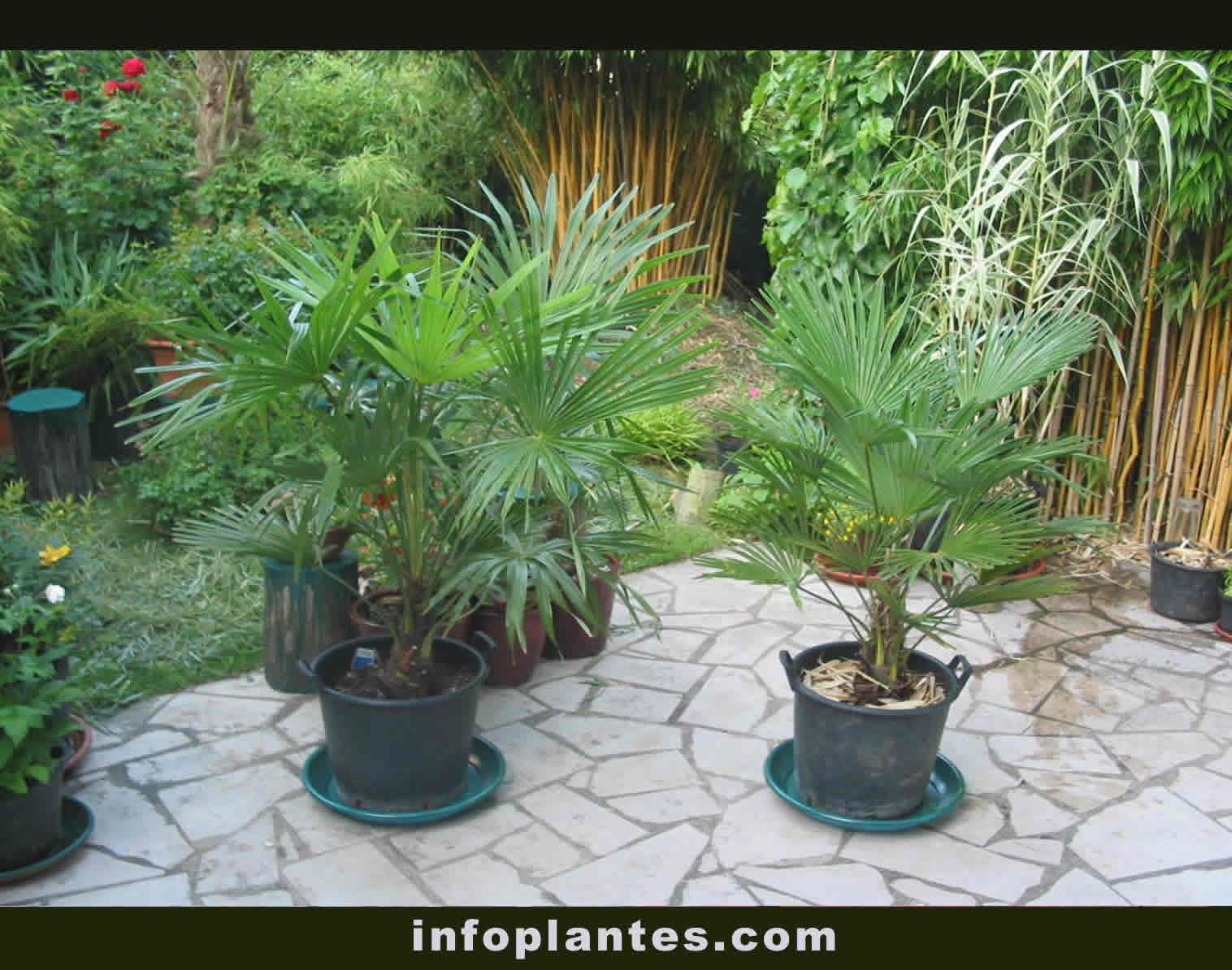 infoplantes.com